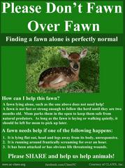 Be A Dear, Leave The Fawns Alone!